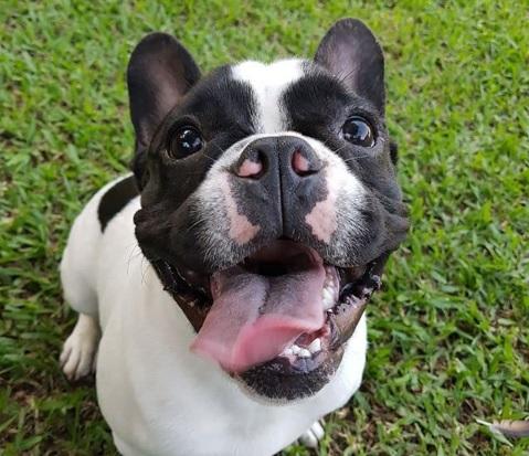 Donato, el más famoso de 'Cuestión de Perros'