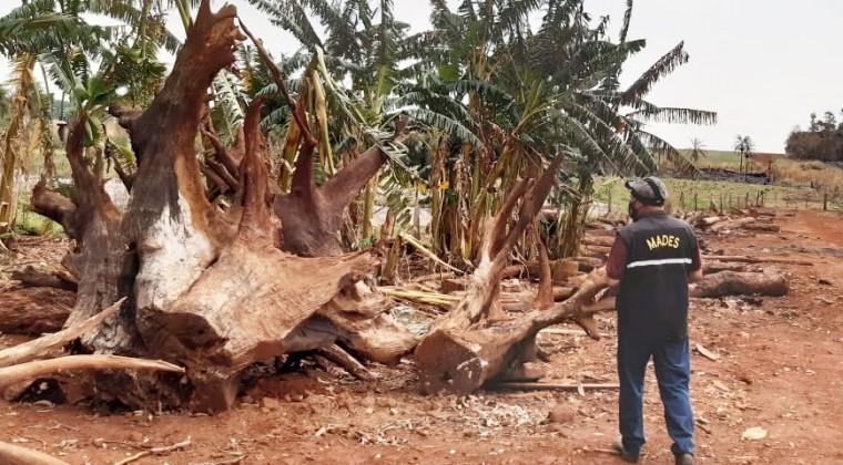 Estancia de Manzoni Wasmosy en la mira por terrible daño ambiental